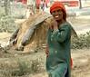 Ferozpur, Punjab. North India.