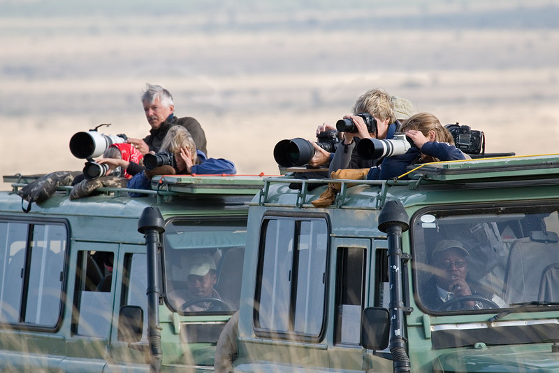 Group Photographing Cheetahs