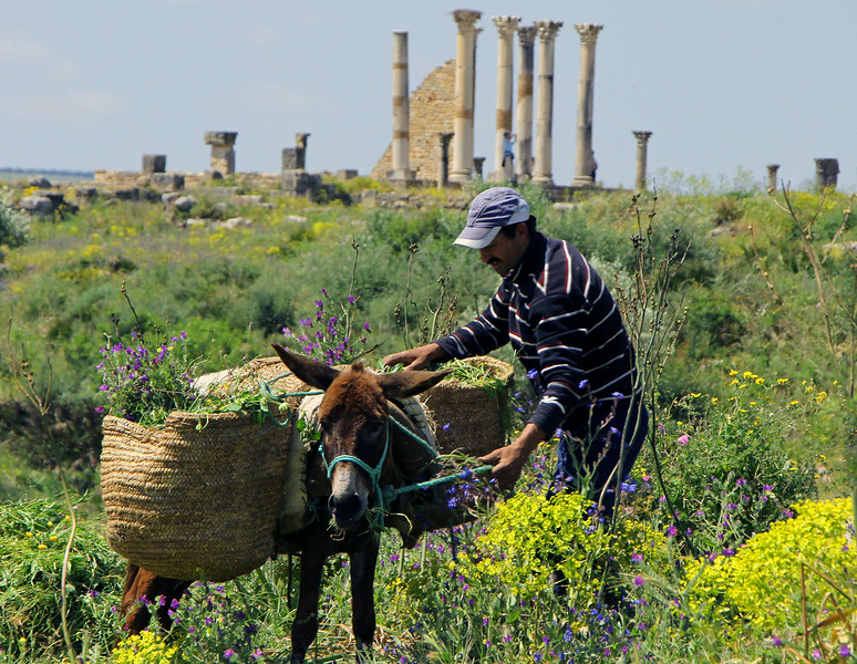 Loading a Donkey with Flowers