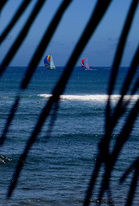 Colorful Sailboats through palm fronds at Sunset Point on Memorial Day North Shore of O'ahu, Hawai'i