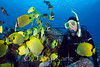 """Diver Wanda Carey with various butterflyfish - Kaiwi Point, Big Island, Hawaii  To see more Hawaii butterflyfish, click <A HREF=""""http://sealifeimages.smugmug.com/gallery/4340860_ssjQL#145561423_X9c8b""""> here</a>"""