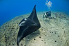 "Manta Ray and photographer Jerry Kane - Keauhou Bay, Hawaii.  Photo by Tom Carey.   To see more Hawaii manta rays, click <A HREF=""http://sealifeimages.smugmug.com/Hawaii/Manta-Rays/4340888_mFKwp#180884819_2xRxm""> here</a>"