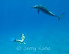 """Snorkeler and Spinner Dolphin (stenella longirostris) - Hookena, Big Island, Hawaii   To see more Hawaii dolphin, click <A HREF=""""http://sealifeimages.smugmug.com/Hawaii/Dolphin/4340867_qnVib#325997379_TPZhZ""""> here</a>"""