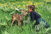 Model Released, 10 year old boy with deer fawn, summer