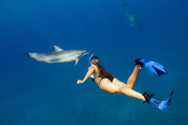 snorkeler swims with spinner dolphins, Stenella longirostris,<br /> Hawaii ( Central Pacific Ocean )