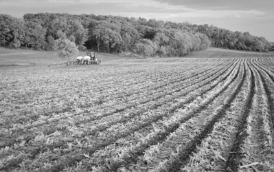 Farm fields - corn planting in spring - 1