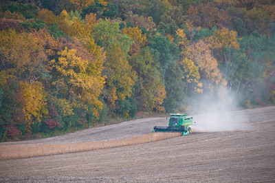 Farm fields - soybean harvesting in fall - 1