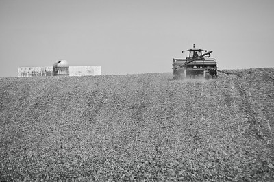 Farm fields - soybean planting in spring - 1