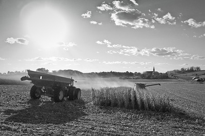 Farm fields - corn harvesting in fall - 1