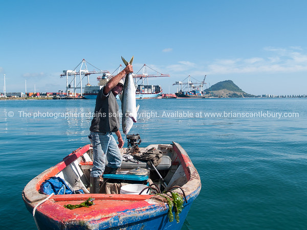 """Tauranga Port and fisherman extra-ordinaire, Darrin Jones in dinghy holding up kingfish just caught.<br /> More interesting people shots at;  <a href=""""http://smu.gs/QBLqN"""">http://smu.gs/QBLqN</a> or try keyworing people in the search tool above"""