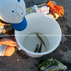 """Fishing from marina, Boy looks at his catch. Fish in bucket See;  <a href=""""http://www.blurb.com/b/3811392-tauranga"""">http://www.blurb.com/b/3811392-tauranga</a> or try keyworing people in the search tool above"""