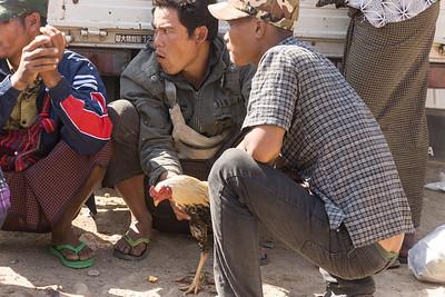 cock fighting at market, Inle Lake, Myanmar