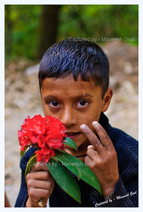 Himachali lad selling rhododendron flowers @ George Everest Point
