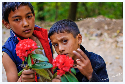 Himachali lads selling rhododendron flowers @ George Everest Point