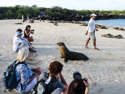 On Santa Fe with the sea lions.          www.blurb.com/b/3551540-galapagos-islands