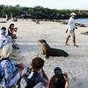 """On Santa Fe with the sea lions.           <a href=""""http://www.blurb.com/b/3551540-galapagos-islands"""">http://www.blurb.com/b/3551540-galapagos-islands</a>"""