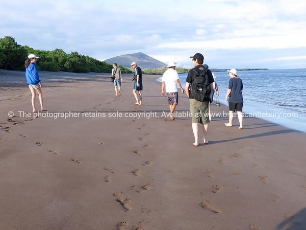 """Morning walk on Santiago beach.           <a href=""""http://www.blurb.com/b/3551540-galapagos-islands"""">http://www.blurb.com/b/3551540-galapagos-islands</a>"""