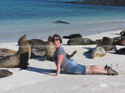 Being a sea lion.          www.blurb.com/b/3551540-galapagos-islands