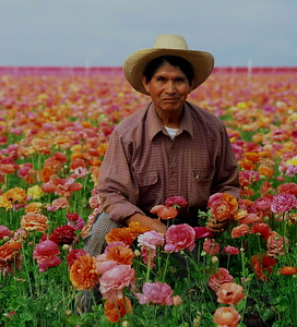 Flower Fields, Carlsbad, Ca