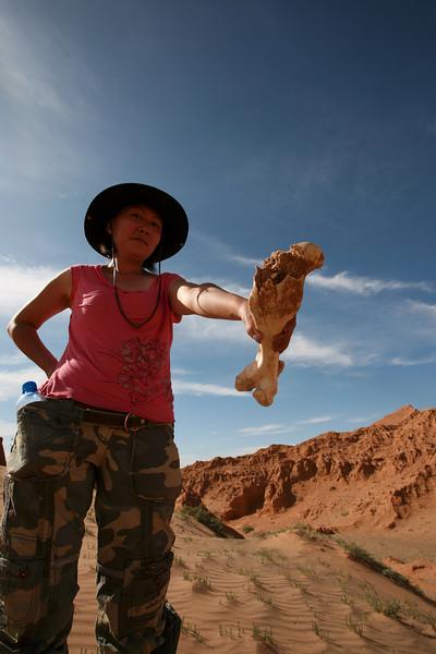 Searching for dinosaur bones in Mongolia.