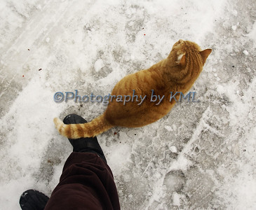 Cat Tail Over a Boot