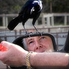 Wonder shows on this man's face as he feeds the bird from his hand
