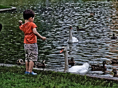 9/26/11: Took this in Boston Public Garden.  At one point, I thought the swan was going to bite the boy.  His mother just stood by and watched.   I turned this into a watercolor because I liked the artistic effect.  If you'd like to see another two versions without the watercolor effect, check out this gallery.  http://www.rpckphotos.com/People/People/18277217_J9h5sx#1496277073_Gk6wfhJ