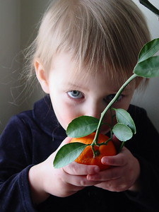 My daughter, at 2, smelling one of only two oranges we grew the first year on our own dwarf orange tree (in MA nonetheless!)  Thank you all for the comments on my balloons.  They were much appreciated.  I have an entire gallery of balloons if you are interested.