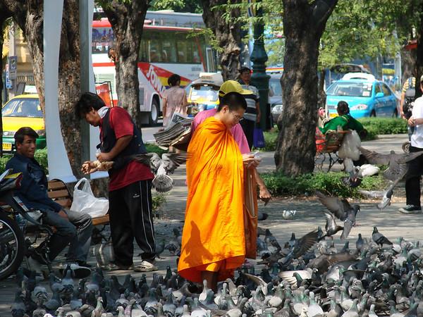 A monk feeds birds in Bangkok.