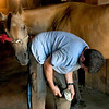 Farrier works at trimming the hooves as the horse looks on with interest
