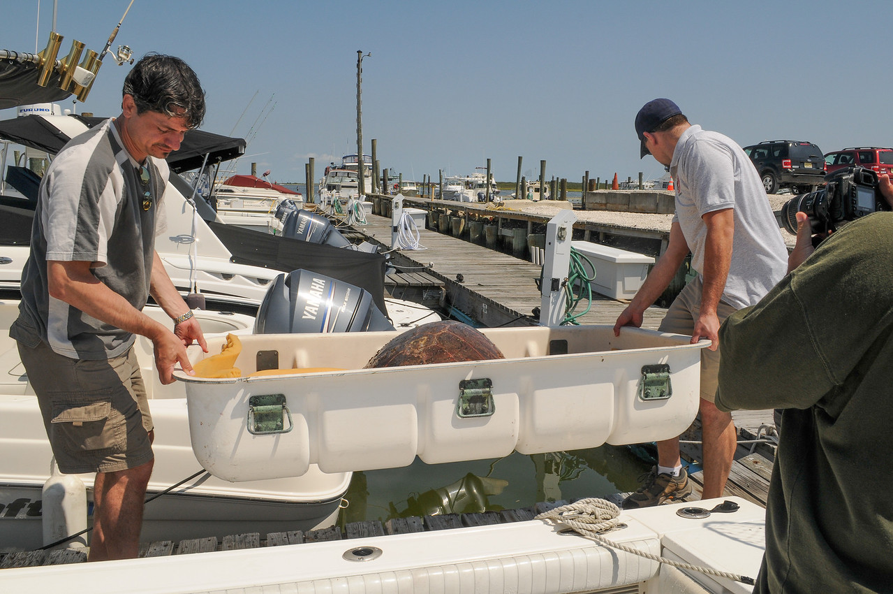Tony helping Marine Mammal Rescue staff member carry Sea Turtle to waiting truck - August 2008