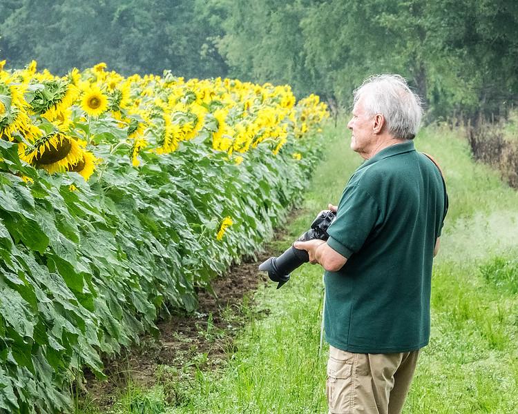 Densunflowers