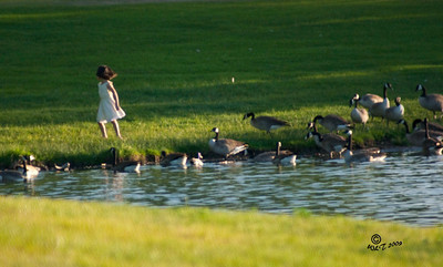 Girl with Geese