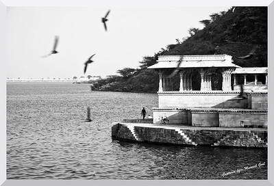 Flight of pigeons | Rajsamand Lake, Rajasthan