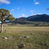 Lone tree Montana.