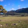 Lone Tree, Montana.