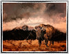 Buffalo at Great Sand Dunes National park in Colorado.  Background is painted in Painter.  This wass a big hairy beast-I stood a mere 30' from him at Zapata Ranch near Alamosa Co.  Of course there were lots of cowhands to feed them so they were hardly in the mood to charge us.