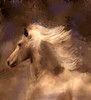 Peruvian Mare, photographed by Sandy and painted by Sandy