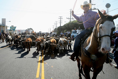 The annual Grand National Rodeo, Horse and Stock show at the Cow palace in Daly City opened with its traditional cattle drive up Geneva Ave. 40 horsemen from the from the San Francisco Horsemen Association herded about 60 cattle from railroad tracks on Bayshore Blvd. to the Cow Palace.  The riders expressed a concern about the venue and hope it is not the last time they visit the Cow Palace for the annual event.