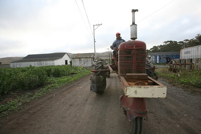 Farmer driving a tracktor at Giust farms in HMB.