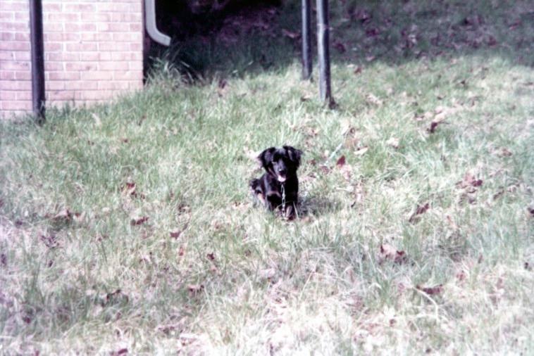 Bobby Sugar in back yard of house on Kingsboro Ct. in Atlanta, GA