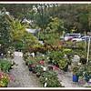 20110416-P1360290wilcox nursery