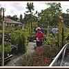 20110416-P1360296wilcox nursery