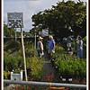 20110416-P1360294wilcox nursery
