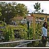 20110416-P1360293wilcox nursery