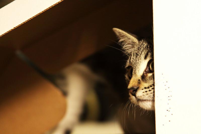 Ada and the Canon box.