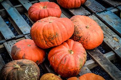 Pumpkin-7342