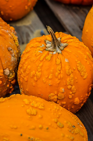 Pumpkin-7623