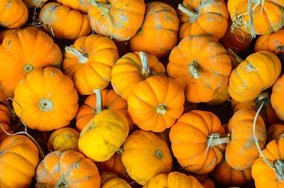 Pumpkin-7620