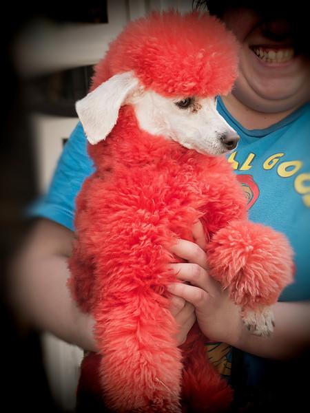 Oh ...A Red Poodle<br /> Findlay Market<br /> Cincinnati, OH